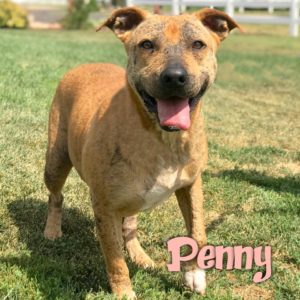Penny, 4 year old, female, Mixed Breed, Bennett, $350, dog-friendly, kid-friendly